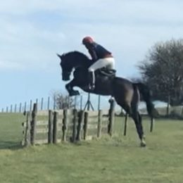 Teenager/Parent's share Competition Eventer Show Jumper Intermediate Working Hunter