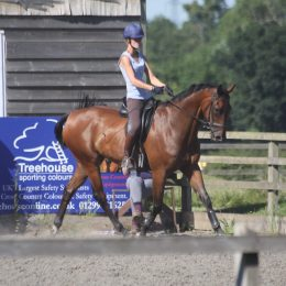 Ideal Grassroots/Dressage horse For sale