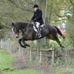 Absolute Jumping Machine 16.3hh 6yo Hunter