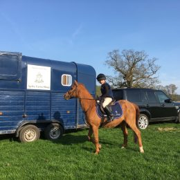 Perky second pony wanted for SJ to 90cm, XC & MG