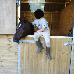 Wanted - pony for a horse whispering 7y old