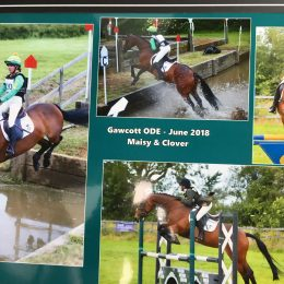 Beautiful Bay Mare 15.2 Irish sports horse Clover for sale all rounder pony/riding club