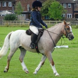 Amazing 10 year old 12h lead rein/first ridden pony for sale