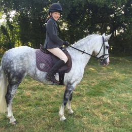For Sale - Gorgeous 13'1 Grey PC Pony part of our family - 10 years old