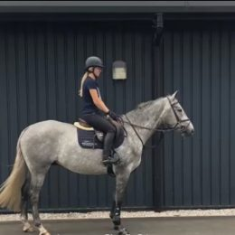 Full up 16h 4yr old dapple grey gelding. Homebred to event. Adv TB mum great prospect. Sad sale