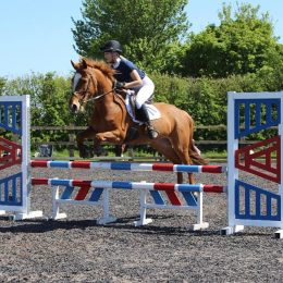 14.1hh 10Year old Pony Club All rounder/ Jumping Pony