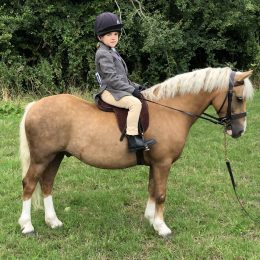 Fantastic 12hh PC/hunting/showing real life barbie pony!