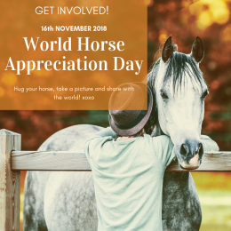 World Horse Appreciation Day