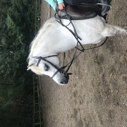 Section A - lead-rein pony