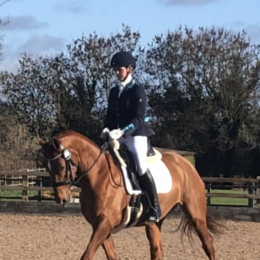 EXCEPTIONALLY SAFE YOUNG HORSE, WITH THE PERFECT TEMPERAMENT