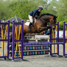 Smart working hunter / event/ BYRDS /SJ/ pc  teams horse 6yrs .