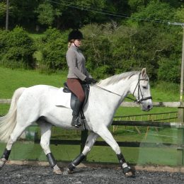 Minty - family friend for dressage and hacking