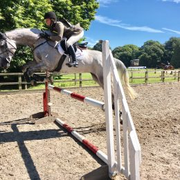 Serious competition horse for sale
