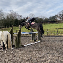 Once in a lifetime 14.2 all rounder with an amazing jump and attitude to life