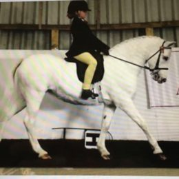Welsh pbr mare Childs 2nd pony . Competition pony