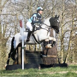 Kind and Genuine 15hh, Eye Catching Gelding For Sale