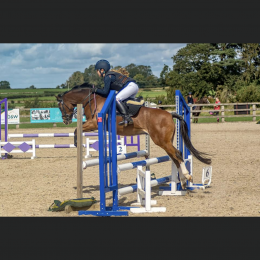 Super Talented Competition Pony