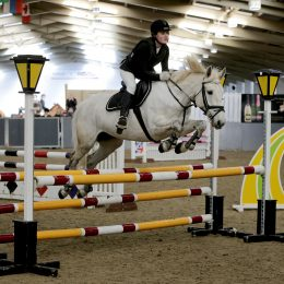 All rounder/pony club mare