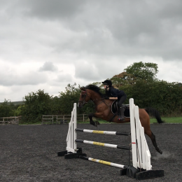 Fabulous 15.1 mare for sale