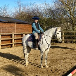 Beautiful 13'2 section B mare for sale