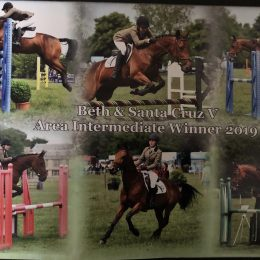 Perfect Competitive Pony 14.2hh
