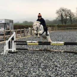 12.2HH Smart Grey Welsh B Rising 11yo Competition Pony