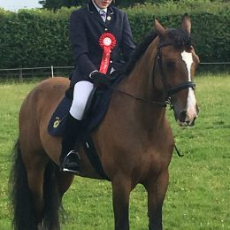 WANTED PC Allrounder/First Event Horse