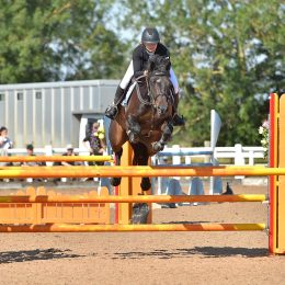 TEENAGERS DREAM. Fantastic competitive little sports horse