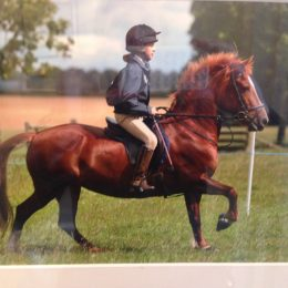 14hh Welsh section D for loan