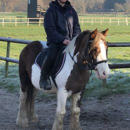 12.2hh Handsome Ride and Drive rising 6yo gelding