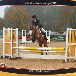 Wanted 14.2 - 15 hh Loan