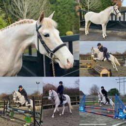 MOTHERS DREAM - ULTIMATE KIDS PONY - SUPER QUIET AND HONEST 13.2