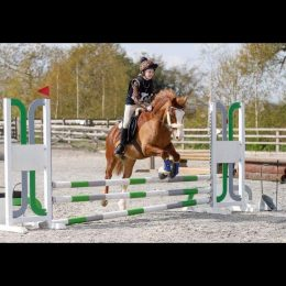 Perfect PC pony or eventer