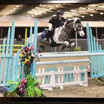 Prolific Show Jumping and Event Pony