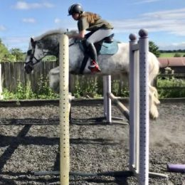 Stunning 14hh PC all rounder, wonderful family pony