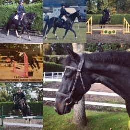 Candice - Stunning, Super Easy, Well Educated - Genuine Mare