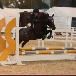 Mother's Dream - 13 hh Showjumping & All-round Pony Club Pony (nr Bath, reduced for quick sale)