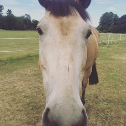 Wanted - Safe and Sane Hacking Horse