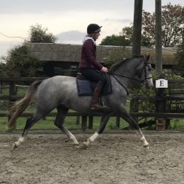 Beautiful rising 4 year old gelding