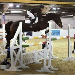 Beautiful talented 7 year old competition mare  For sale