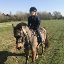 Looking for a safe pony club allrounder 13-13.2hh