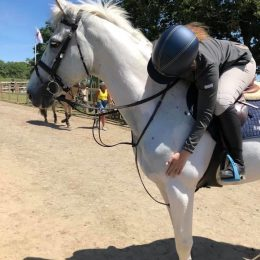 Experienced Show jumping horse