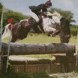15.3hh genuine all-rounder