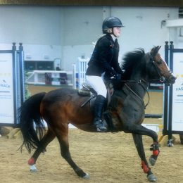 Super allrounder/ competition pony