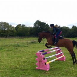 Wanted - Pony Club/Eventing all rounder