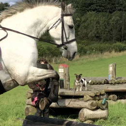 Eye catching 14.2, 9 year old Connemara mare.  Green book, class 1.