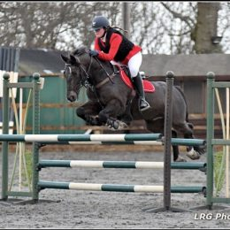 Fast competition jumping pony. Schoolmaster BS pony. Potential BE.