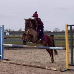 Sweet natured jumping pony