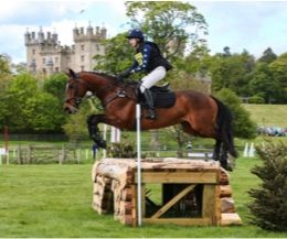 Fabulous 16.1 All rounder Mare For Sale