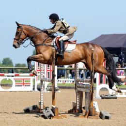 Genuine All rounder/Eventer Fred 8 year old 16.2 TB